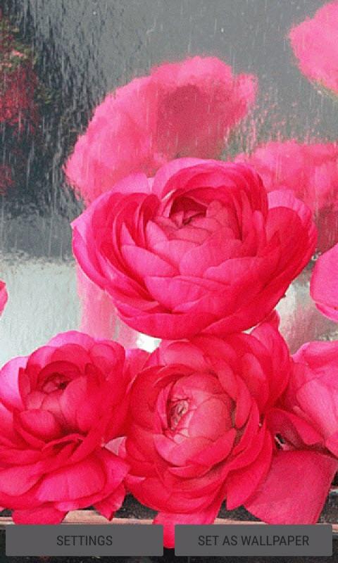 Rainy Pink Roses LWP
