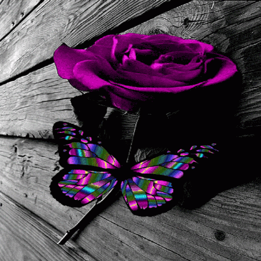 Multicolor Butterfly Rose LWP