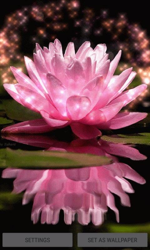 Pink Lotus Live Wallpaper