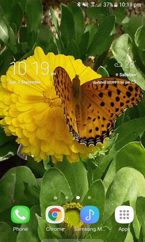 Brown Butterfly Live Wallpaper