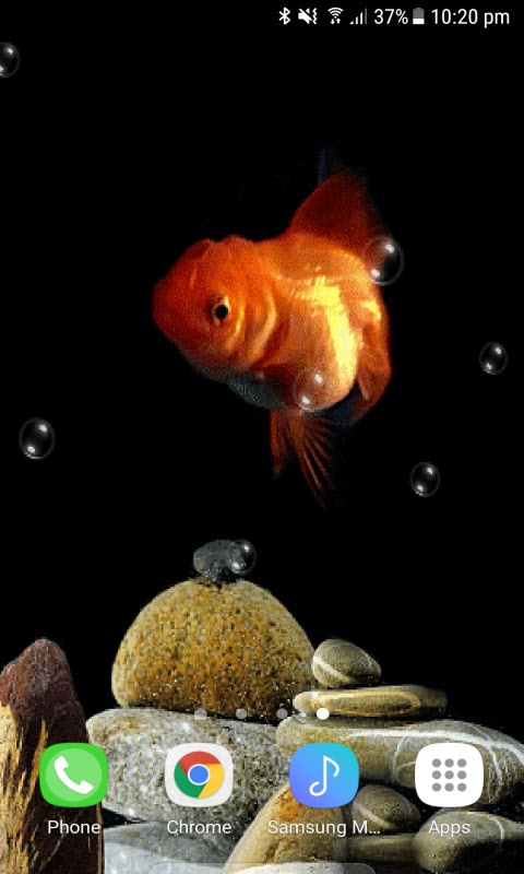 Orange Fish Bubble LWP