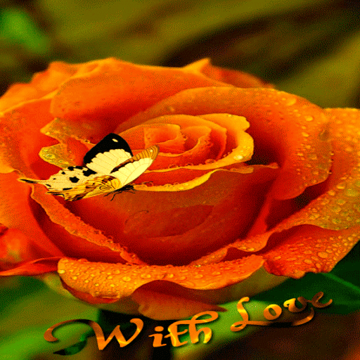 Orange Rose Butterfly LWP