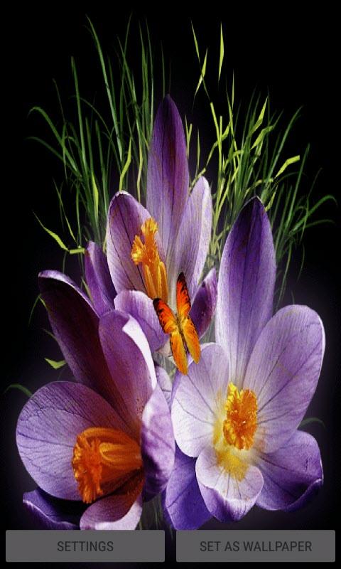 Purple Flowers Butterflies LWP