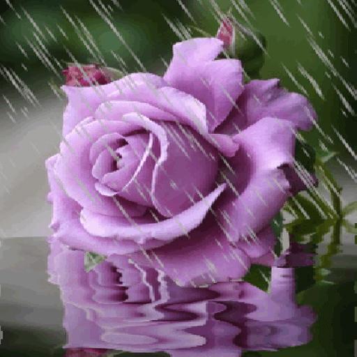 Rainy Purple Flower LWP