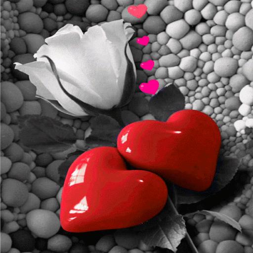 Valentine Rose Hearts LWP