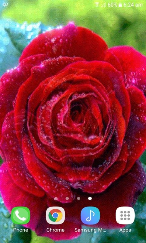 Rose Beauty Live Wallpaper