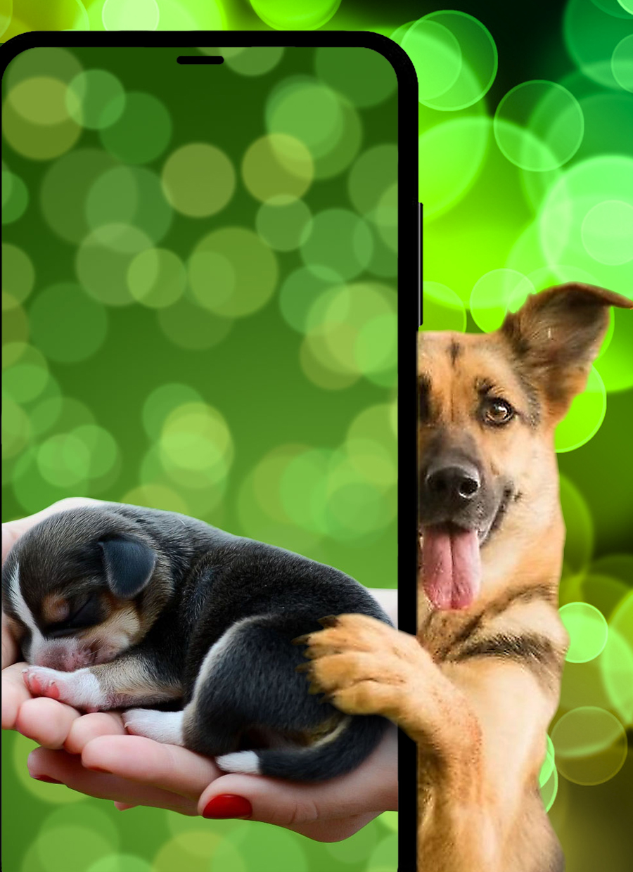 Lovely dogs and puppies wallpapers HD