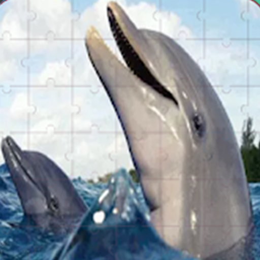 Real Dolphins Game : Jigsaw Puzzle 2019