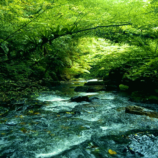 Green Forest River LWP