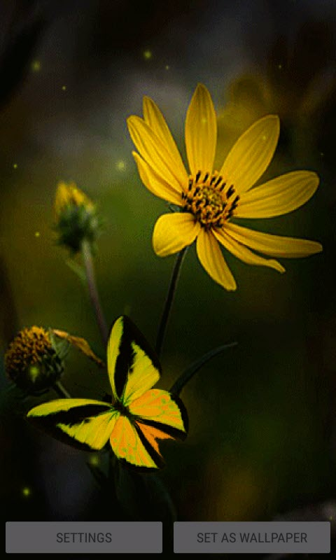 Yellow Butterfly Live Wallpaper