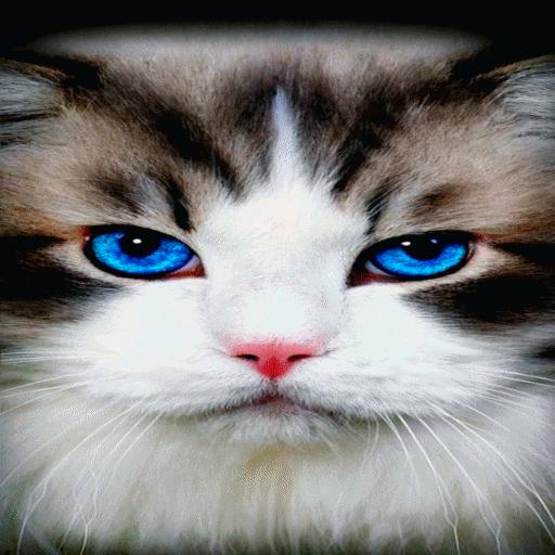 Blue Eyes Cat LWP