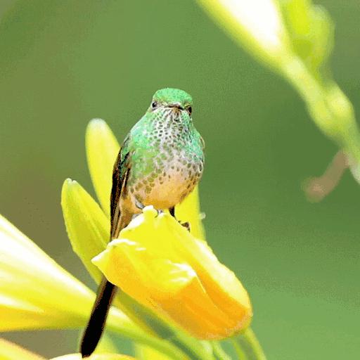 Bird On Flower LWP