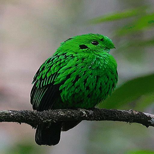 Cute Green Bird LWP