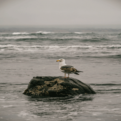 Alone Bird Live Wallpaper