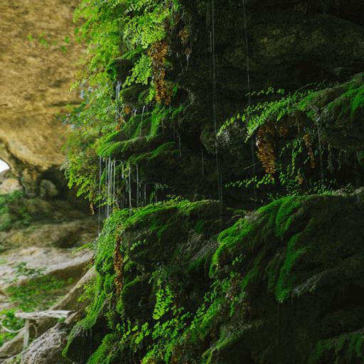 Rainy Plants Live Wallpaper