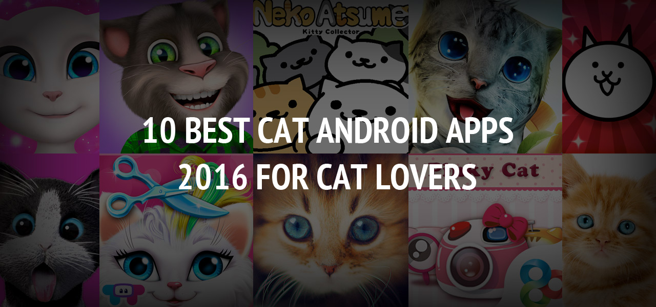 10 Best Cat Android Apps 2016 for Cat Lovers